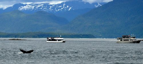 alaska whales nature