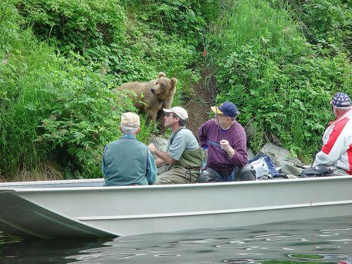alaska fishing bear