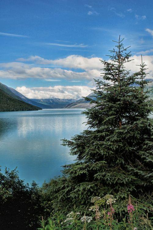 alaska,kraštovaizdis,seward alaska,dykuma,upė,alaskan,usa,amerikietis,gamta,lauke,dangus,kalnas,diapazonas,vaizdas,vaizdingas,kelionė,turizmas,peizažas,slėnis