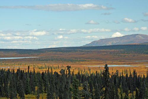 alaska forest mountain
