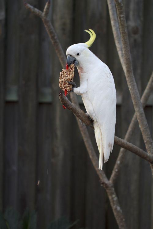 alba animal aviary