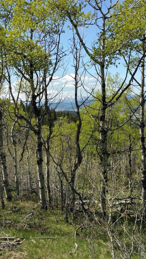 alberta foothills mountains landscape