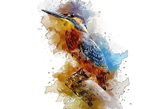 alcedo atthis  common kingfisher  bird