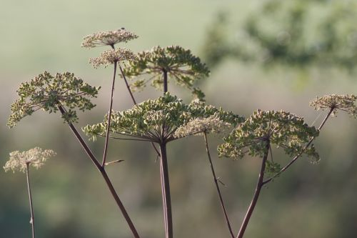 alexanders british countryside foliage