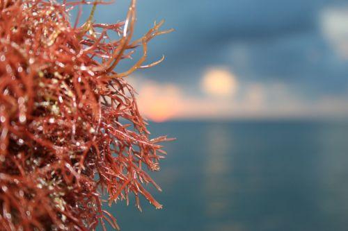 algae water sea