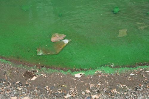 Algae And Pollution In Water