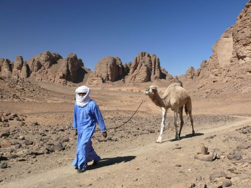 algeria desert dromedary