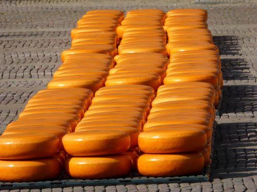 alkmaar cheese market cheese