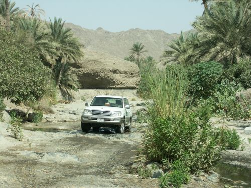 visureigė,Toyota,dykuma,wadi,palmės,šventė
