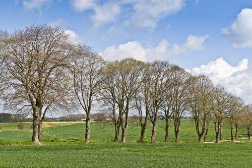 allé trees natural