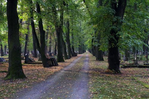 alley cemetery autumn