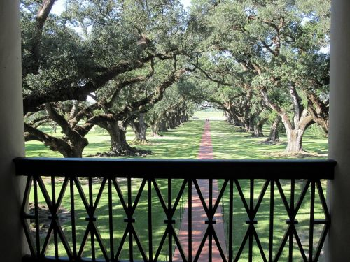 alley oaks trees