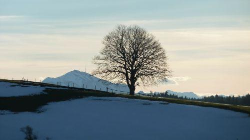 allgäu winter greened