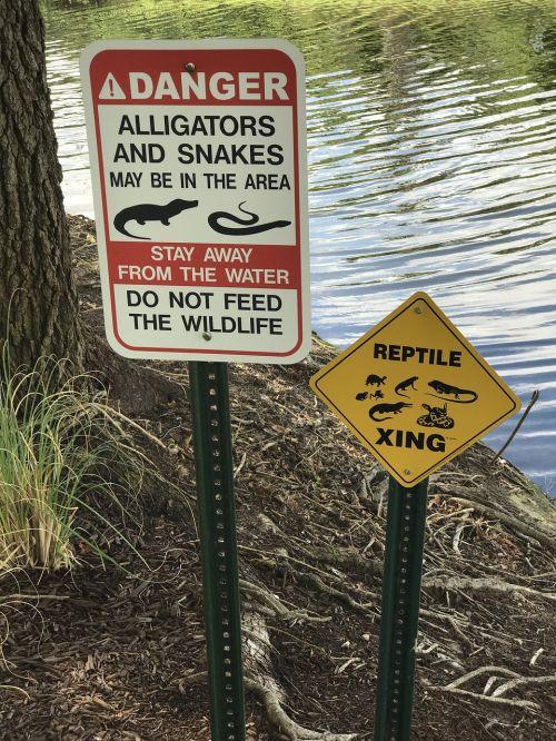 alligator snakes wild