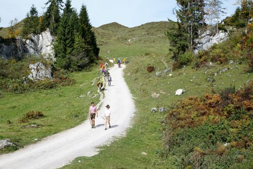 alm austria wilder