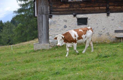 alm  alpine hut  nature
