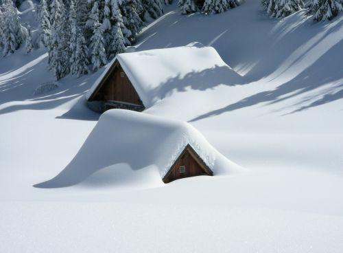 alm friuli snow
