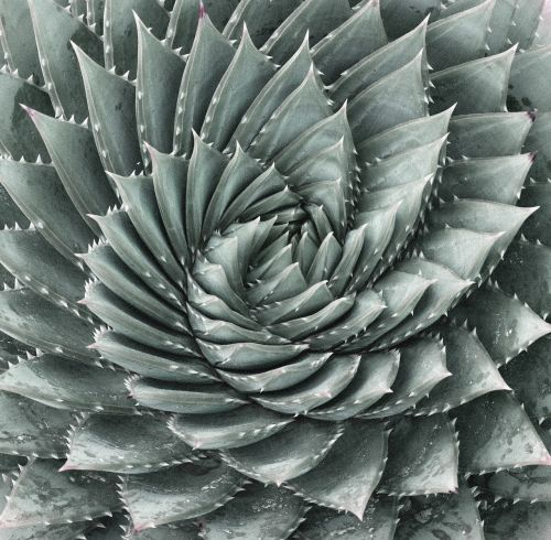 aloe cactus rotate