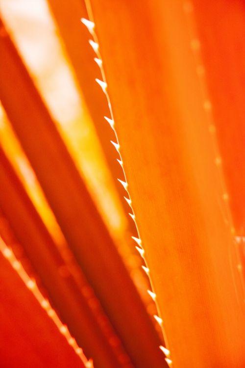 Aloe Vera Leaf Detail