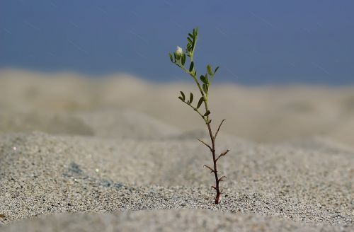 alone plant tree