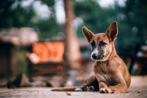 alone animal beautiful