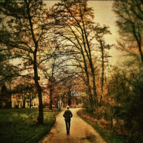 alone tree nature
