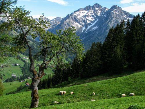 alpine kleinwalsertal alm