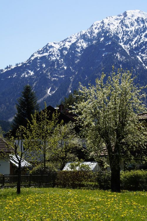alpine allgäu spring