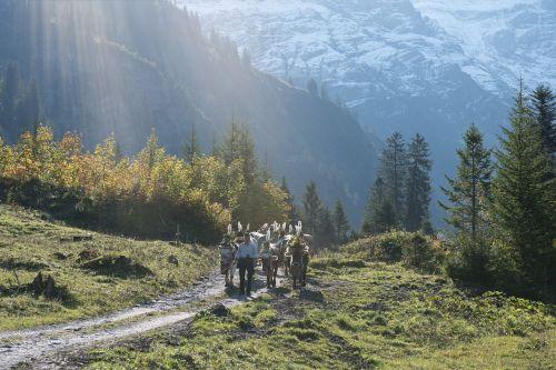 alpine désalpe descent