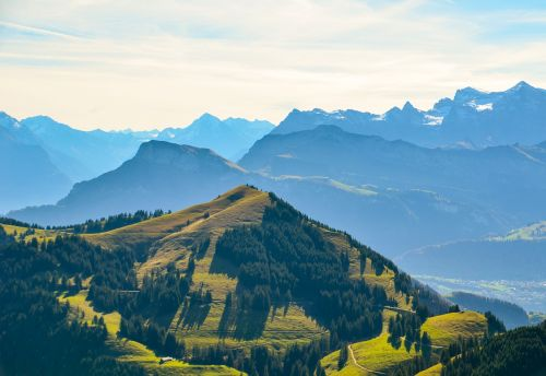 alpine foresight mountains
