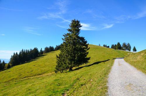 alpine rigi trail