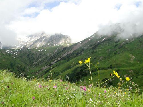 alpine landscape mountain flower