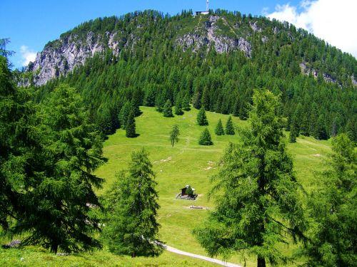alpine idyll pasture
