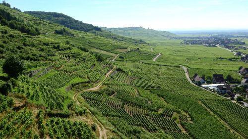 alsace france vineyard