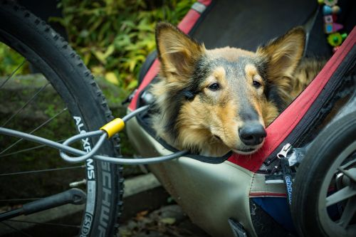 alternative transportation bicycle trailer dog