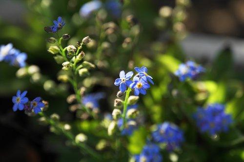 although  plant  flowers