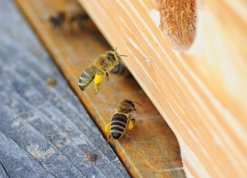 always bee macro
