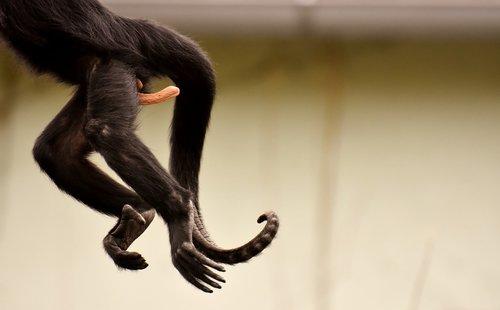am gone  funny  monkey