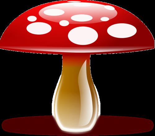 amanita muscaria fly agaric fungus
