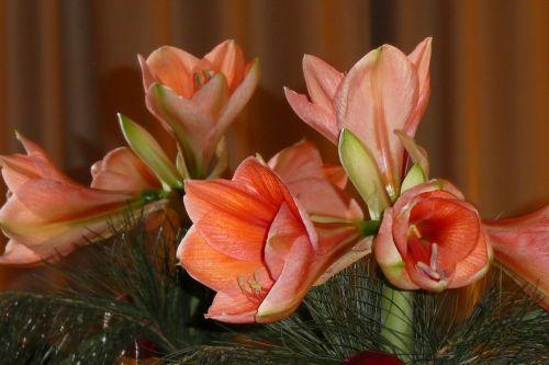 amaryllis mirroring flowers