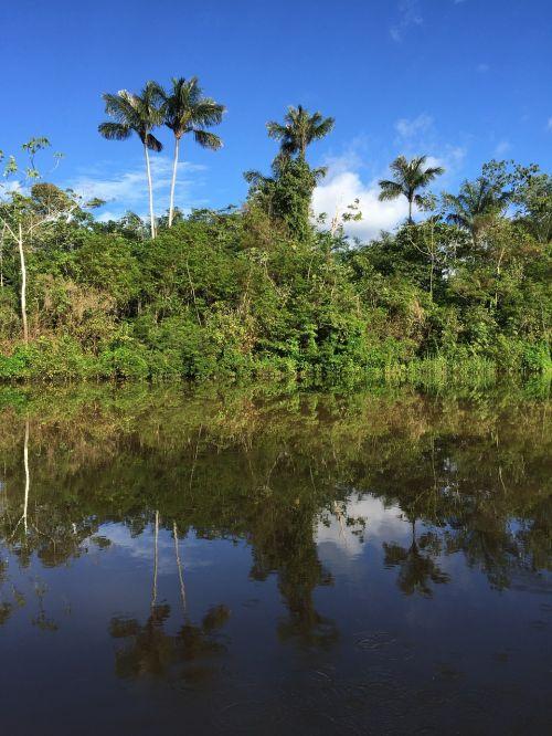 amazon tropics river