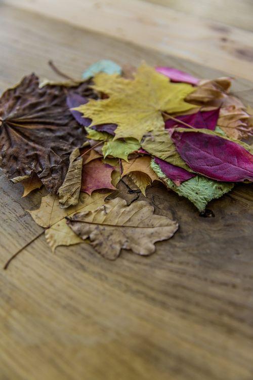 amber autumn autumn foliage