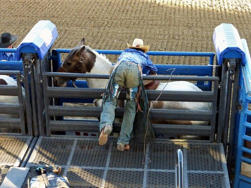 america  cody  rodeo