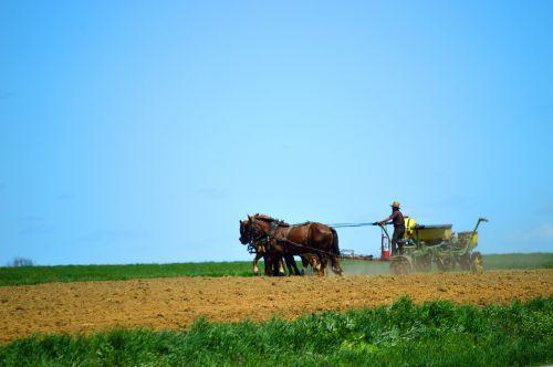 amish garden to go horse