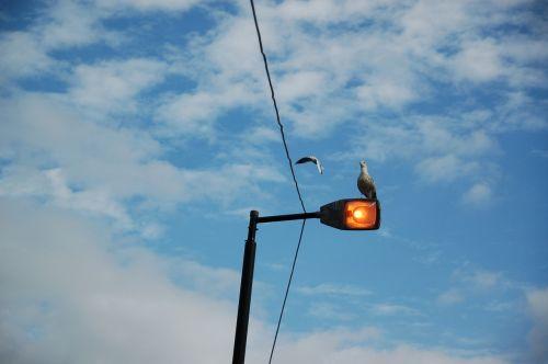 amsterdam seagull bird