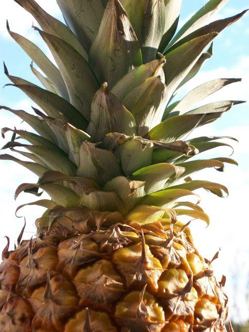 ananas fruit juice
