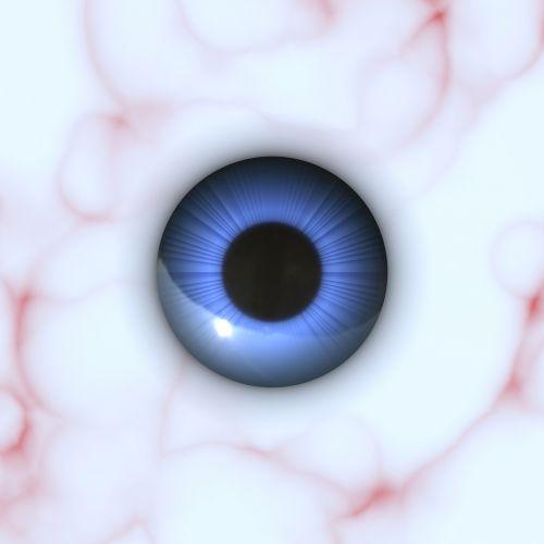 anatomy eye eyeball