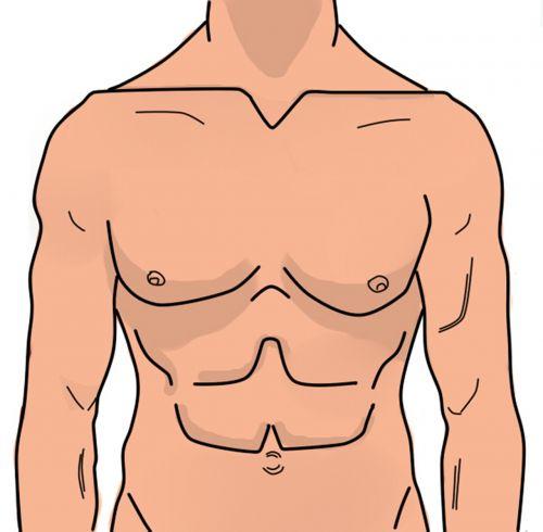 anatomy man abdomen