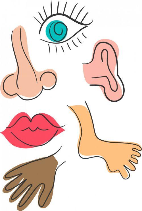 Anatomy Doodles