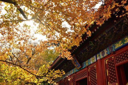 ancient architecture beijing xiangshan